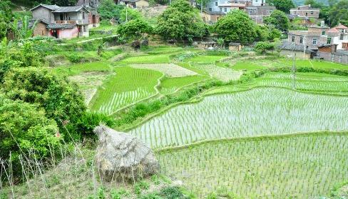 美丽的农村